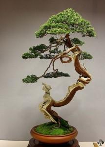 08-juniper-bonsai-blasco-paz