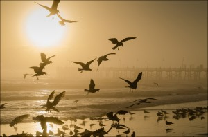 Sunrise Seagulls