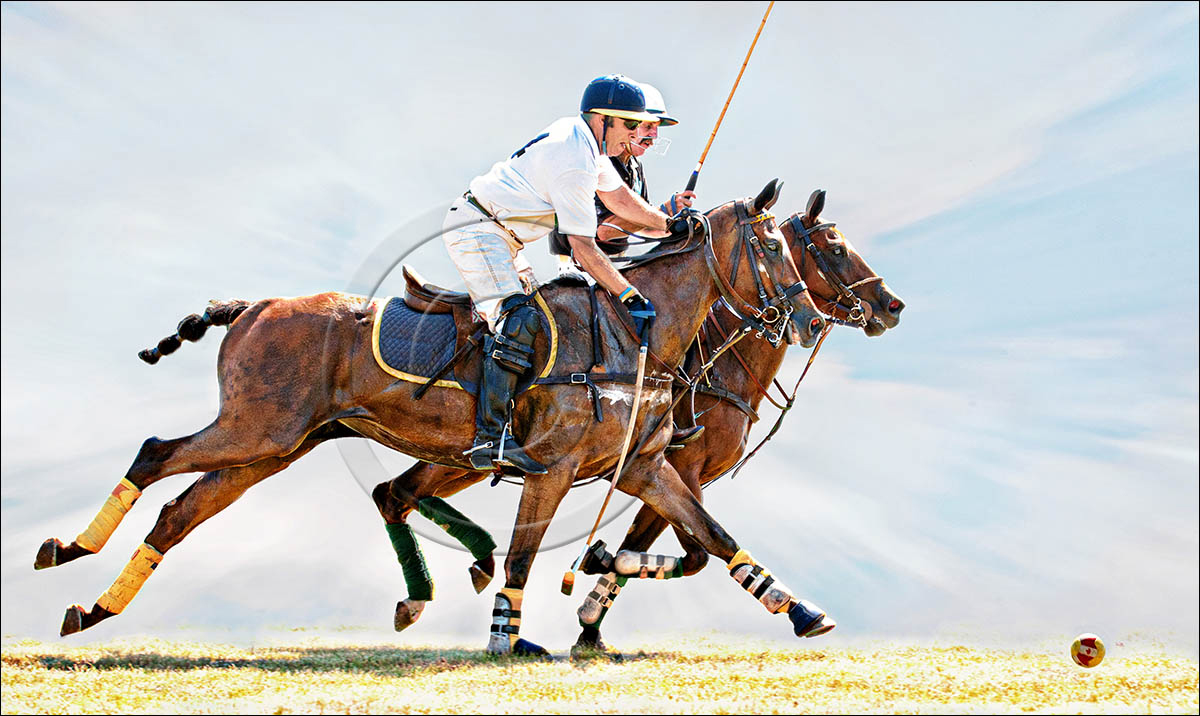 WINNER REPLACEMENT IMAGE Photo Life Showtime Contest - Horses - Polo Pony