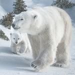 Pratt_Mother&cubS